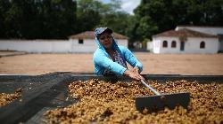 Asia Coffee-Sluggish trading in Vietnam ahead of Lunar New Year