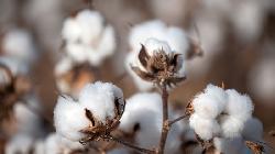 BRIEF-Ambika Cotton Mills Dec-Qtr Profit Rises