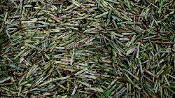 Analyst Green Pool cuts global sugar surplus forecast for this season and next