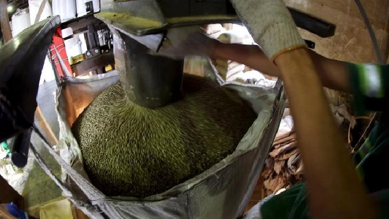 SOFTS-Robusta coffee steadies in wake of arabica rally - Investing.com India