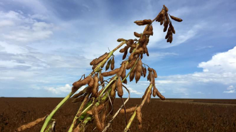 VEGOILS-Palm oil rises 1% on higher soybean oil, weaker ringgit - Investing.com India
