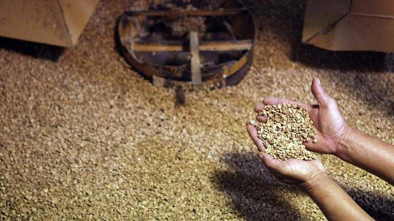 SOFTS-Robusta coffee edges up in wake of arabica rally - Investing.com India