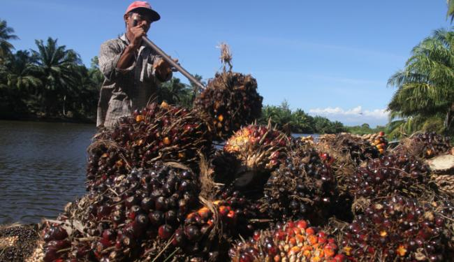 © Warta Ekonomi. EPOA Dukung Indonesia Soal Diskriminasi Sawit Oleh Eropa