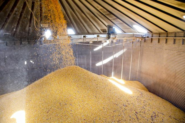 © Bloomberg. Corn falls into a grain bin on a farm during harvest in Princeton, Illinois, U.S., on Monday, Oct. 9, 2017. Photographer: Daniel Acker/Bloomberg