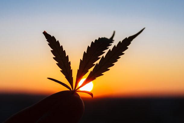 3 Cannabis-Aktien, die nach dem Absturz ein Kauf sind