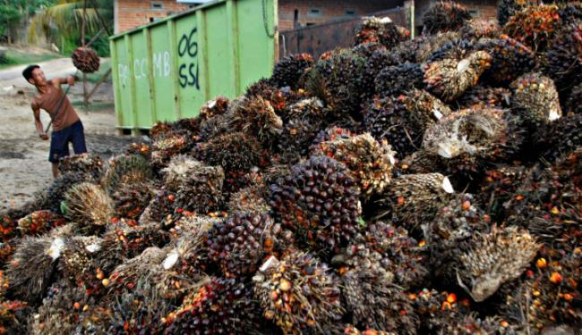 Indonesia Jajaki Ekspor Lada & Produk Kelapa Sawit ke Turki