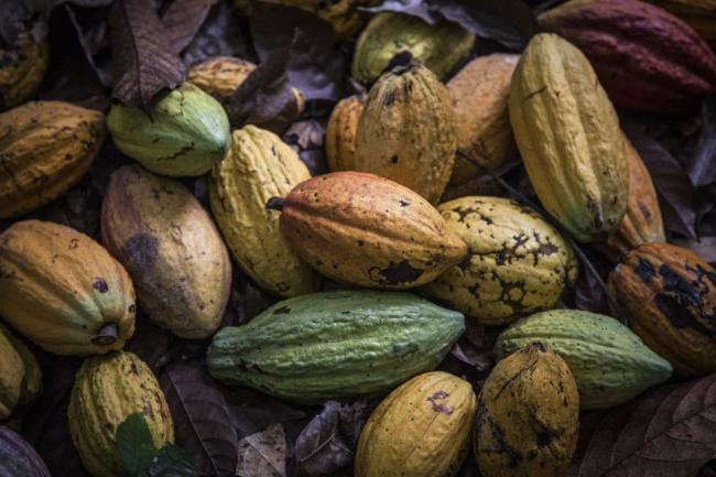 Cocoa Set for Bumpy Ride as Africa Premium Disrupts Futures
