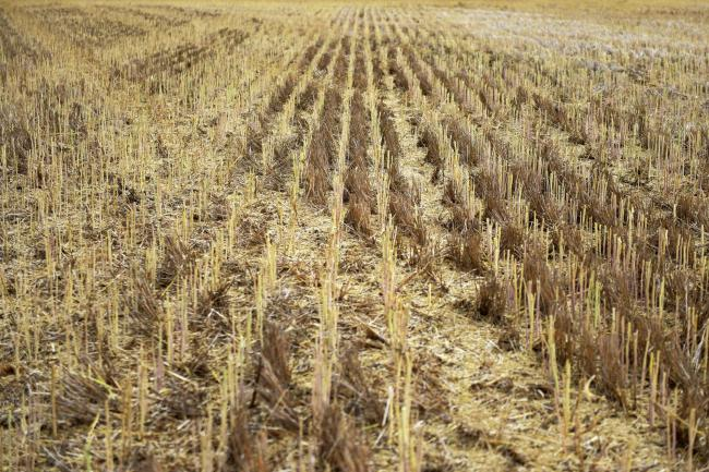 Australia in Landmark $1.3 Billion Project to Turn Farm Waste to Energy