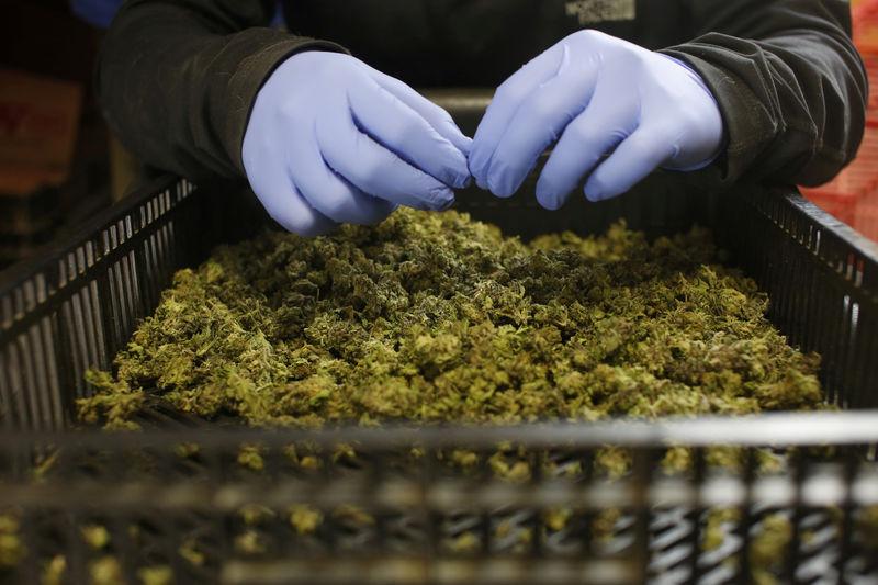Les actions de Cannabis s'écroulent après un bond lié au forum Reddit Wallstreetbets