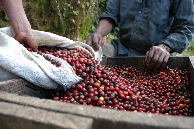 Coffee Futures Plunge the Most in Nine Years