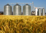 Grain futures - weekly outlook: July 13 - 17