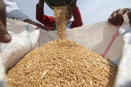 Цены на российскую пшеницу поднялись до 5-месячного максимума