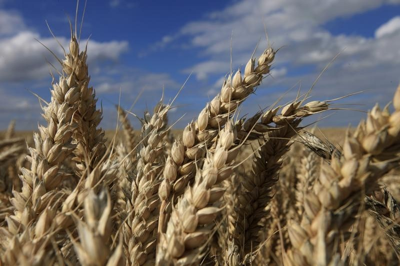 Heavy rain expected across much of Australia in boost for wheat growers