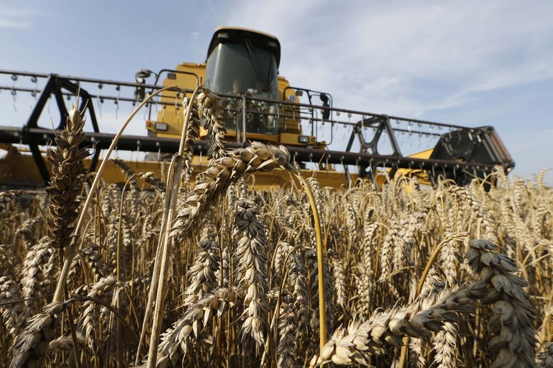 © Reuters.  Australia wheat output may miss forecast by 20 pct due to dry weather