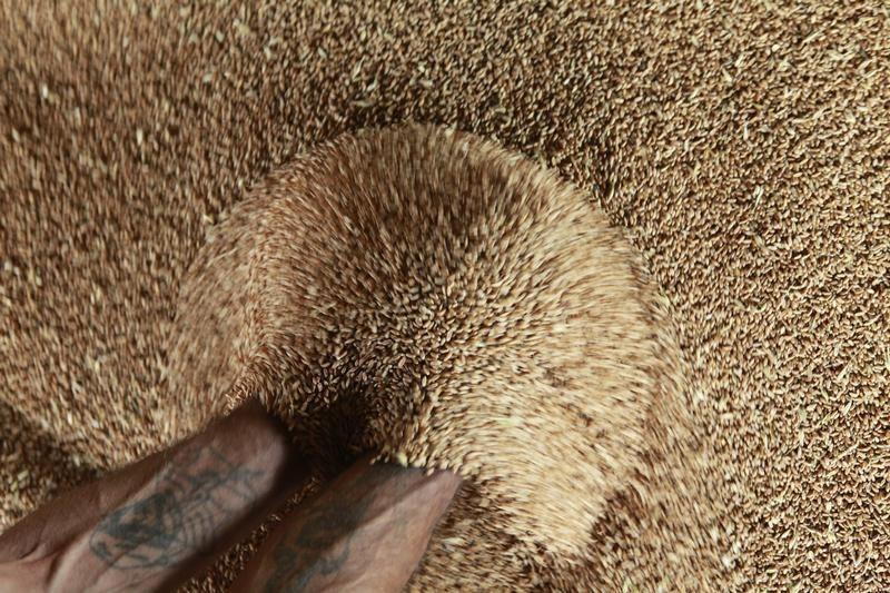 © Reuters.  Россия в 1-м полугодии 2017/2018 сельхозгода экспортировала рекордные 28,1 млн т зерна