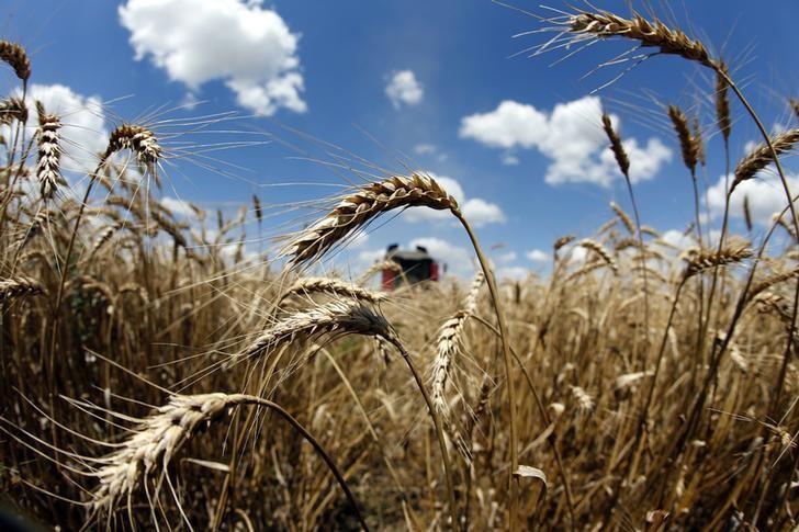 © Reuters.  Japan offers to buy 113,138 tonnes of food wheat via tender