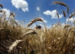 UPDATE 2-Russian wheat lowest offerd at Egypt's GASC wheat tender