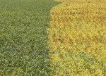 GRAINS-Soybeans edge higher from 3-week low, U.S. acreage weighs