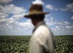 Estimativas do IBGE indicam retração na safra agrícola para este ano