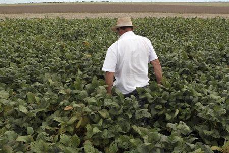 美国大豆期货至15周高点