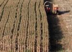 الذرة تتراجع لادنى سعر لها في اسبوع وسط توقعات طقس مثالي للمحاصيل