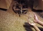 Polinização assistida e inteligente aumenta em 20% produção de café, diz startup