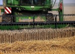 U.S. wheat futures rally to 6-month peak on harvest concerns