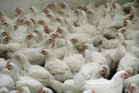 Coronavírus redireciona embarques de frango dos EUA com destino à China