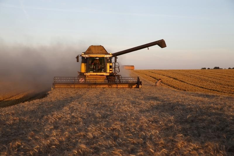 © Reuters.  Australia cuts wheat forecast by nearly 13 percent as drought wilts rural economy