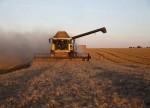 Iraque avalia importações de trigo da Rússia