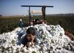 Cotton exports touch 69 lakh bales till Aug 31: CAI