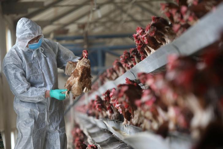 © Reuters.  Hong Kong suspende importação de carne de ave devido a focos de gripe aviária