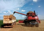 GRAINS-U.S. wheat futures sink to contract lows; soybeans drop