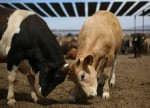 What's your beef? Europe, Latin American trade talks falter