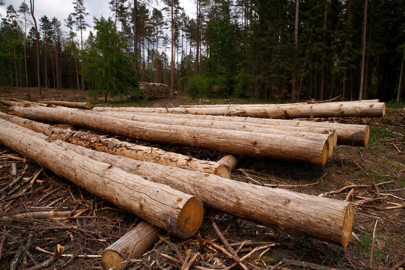 © Reuters.  UPDATE 1-U.S. ITC finds Canada lumber harms U.S. producers, duties to remain