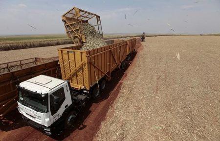 भारत का शीर्ष चीनी उत्पादक राज्य गन्ने की कीमतों को अपरिवर्तित रखता है