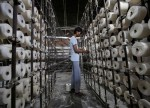 India's industrial output grows 3.8 pct y/y in Sept- govt