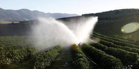 Starbucks Pays Farmers $20 Million More as Coffee Crisis Deepens