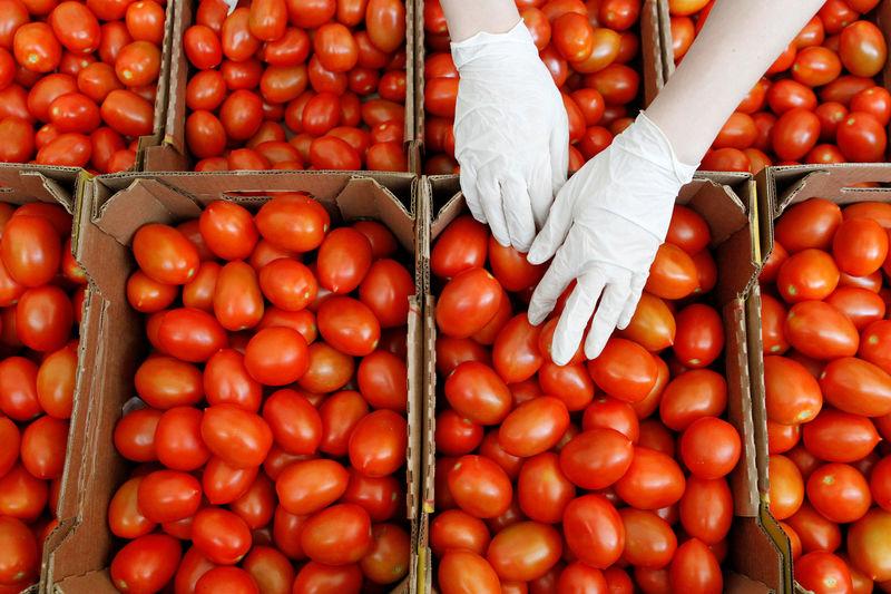 Rusya, Türkiye'den domates alımına uyguladığı kotanın 300.000 tona yükseltilmesini teklif etti