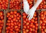Список поставщиков томатов из Турции может быть расширен - Россельхознадзор
