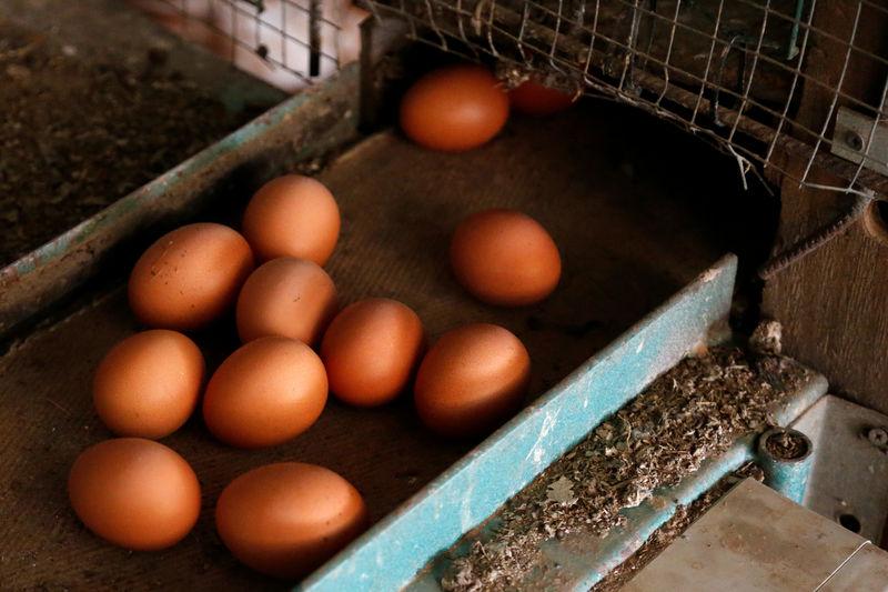 Kasımda tavuk eti üretimi 169 bin 903 ton, tavuk yumurtası üretimi 1,7 milyar adet olarak gerçekleşti