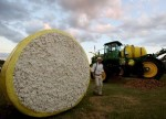 Cotton likely to remain range-bound till June-end