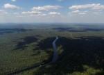За последние 25 лет темпы исчезновения лесов сократились вдвое - ФАО