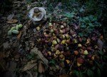 SOFTS-Cocoa lifted by Asia grind data; sugar, coffee also higher