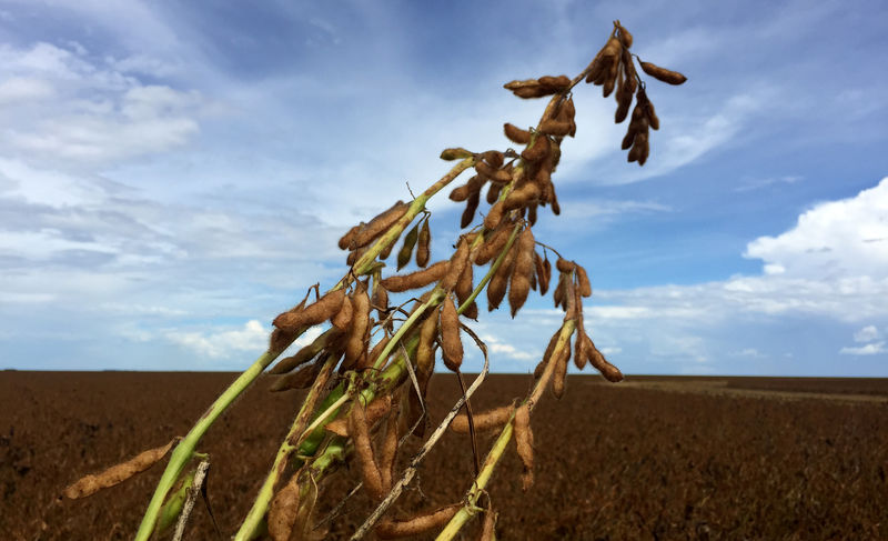 ICE canola futures close lower on technical sales, soybean weakness