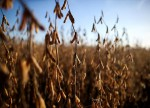Soybean futures poised to settle at a more than 2-year high after USDA data