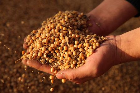 美国大豆出口委员会:中国正积极采购大豆 未来六个月需求前景乐观