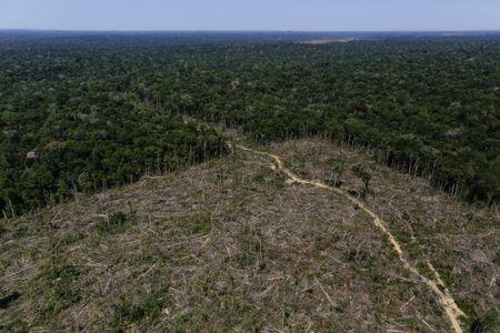 Natura faz apelo por preservação da Amazônia após queimadas atingirem fornecedores