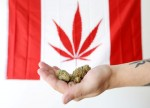 UPDATE 4-Sober start as recreational marijuana becomes legal in Canada