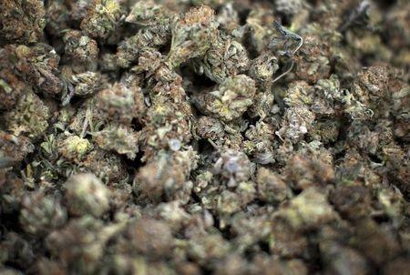 Kanadas Marihuana-Industrie hat gerade diese 6-monatige Serie durchbrochen